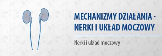 Mechanizmy działania – nerki i układ moczowy